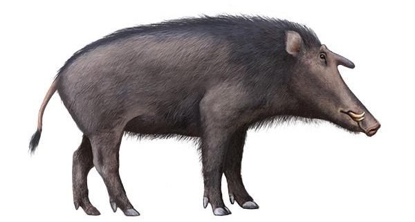 Kubanochoerus robustus