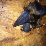 Bat Matenity Ward Madison GA