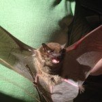 johns creek bat