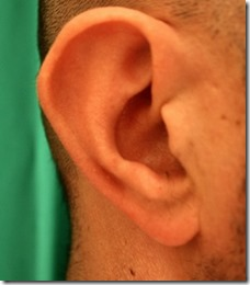 oreille de batteur