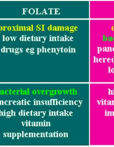 Serum folate and cobalamin vitamin  also tli  battlab veterinary diagnostic clinical rh