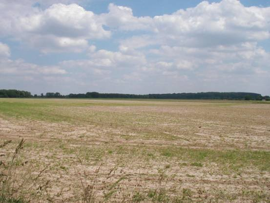 """Photograph No 4. Looking across the French front line. The ground to the right falls away gently towards the village of Vezon. Over this ground the """"Infernal Column"""" advanced to attack the French centre."""