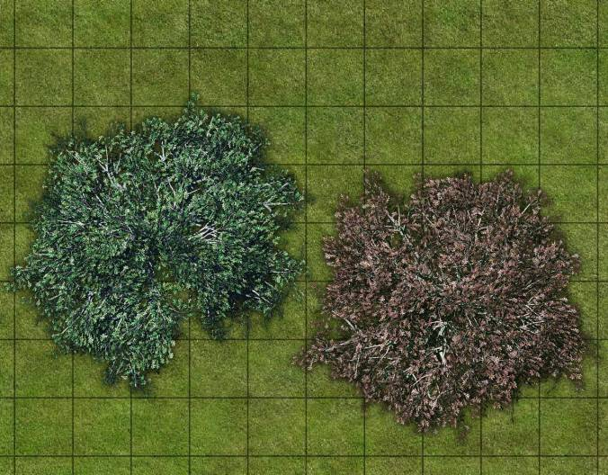 BZF_oak_trees_samples