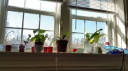 Windowsill