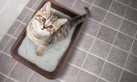 cat in cat litter