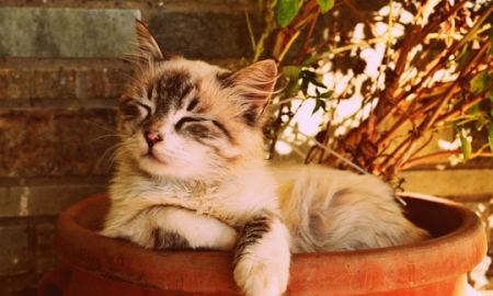 white cat sitting in a planter