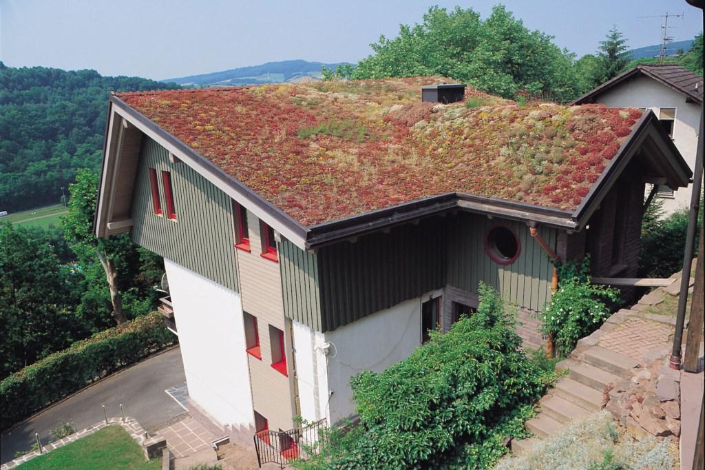 Dachbegrünung auf einem modernen Haus
