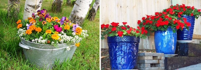 Container Gardens with flowers
