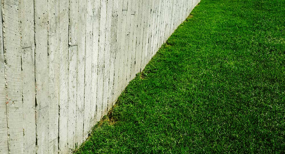 green grass along a fence