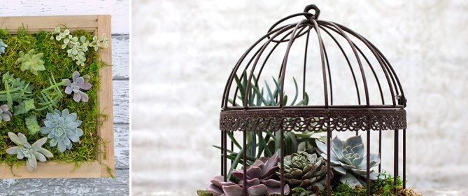 Succulent-Bird-Cages