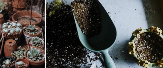 scucculents in pots (left), garden shovel filled with soil