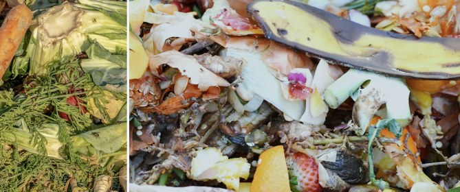 degradable foods compost