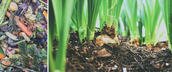compost as fertilizer