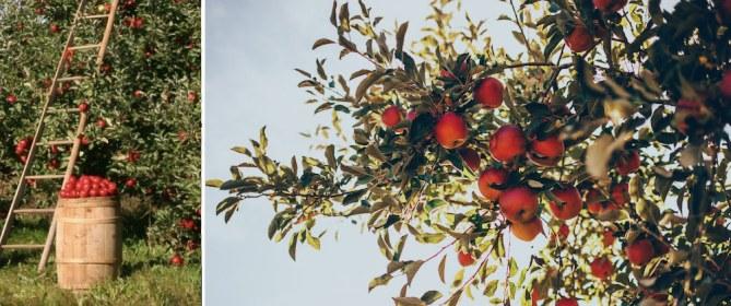 fruit trees dormant oil spray