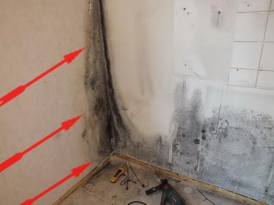 Bauexperte Bauschadensexperte Immobilienexperte Schimmel Schätzung Hausscheck