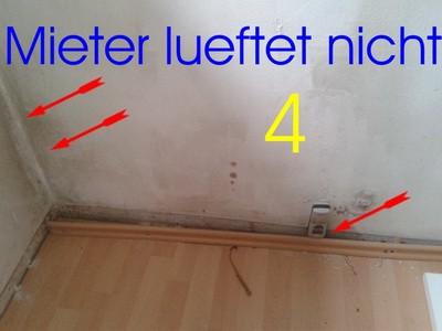 Bekannt Mieter lüftet nicht - Schimmelpilzgutachter - BAUGUTACHTER RN69