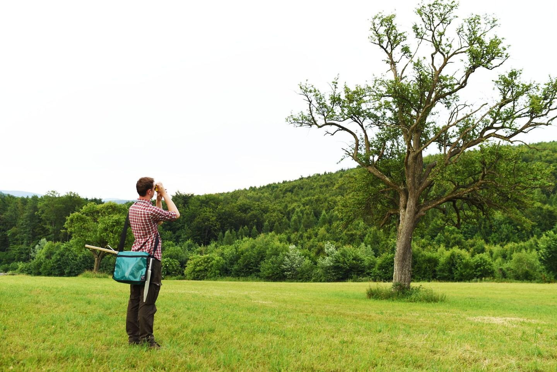 Durchführung einer Baumkontrolle