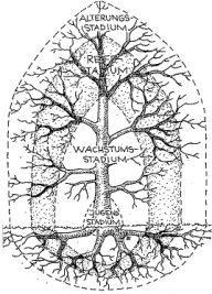 Baumschnitt gemäß Baumentwicklung