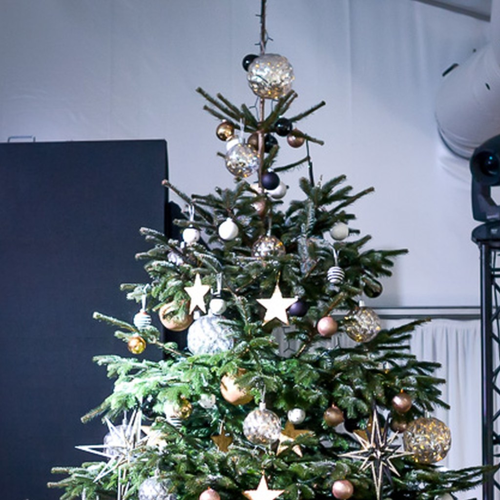 Christbaum, Mierpfalnzen, Dekoration, weihnachten