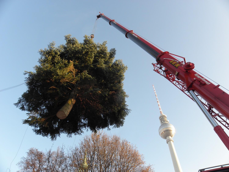 Aufstellung des Weihnachtsbaums vor dem Roten Rathaus in Berlin.