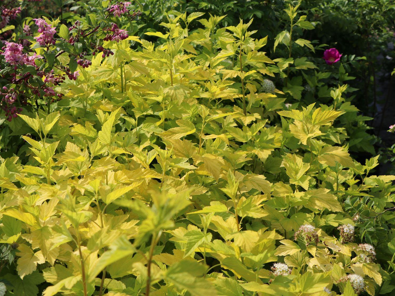 Kübelpflanzen Sonniger Standort Winterhart Pflanzen Schattiger