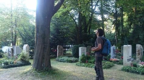 Baumkontrolle Waldfriedhof Dachau