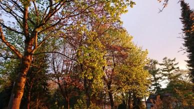 Bäume am Friedhof