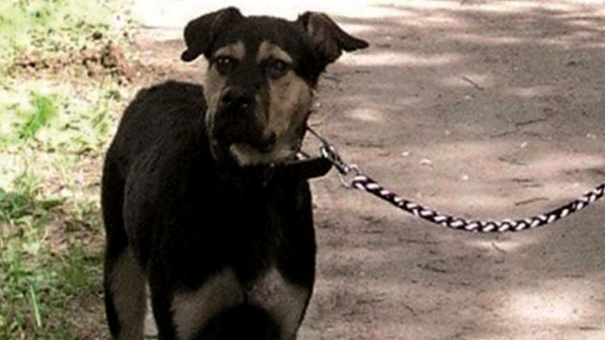 Anmeldung zur Hundesteuer in Baunatal auch online möglich