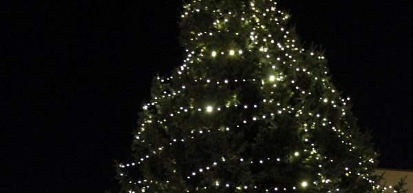 Weihnachtsbaum Entsorgung Baunatal
