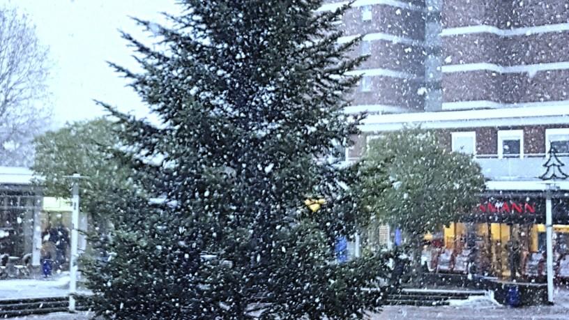 Baunatal, Weihnachten, Weihnachtsbaum, Entsorgung