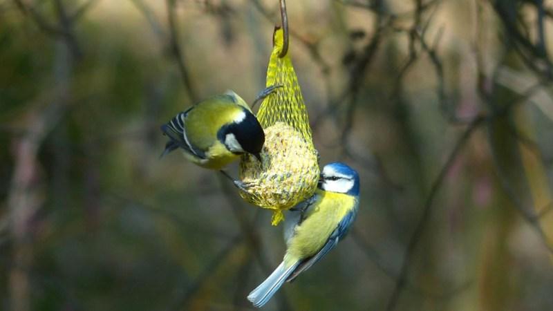 Fütterung der Vögel ist sinnvoll im Winter