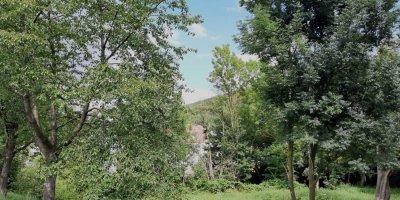 Obstbaum, Patenschaft, Naturschutz