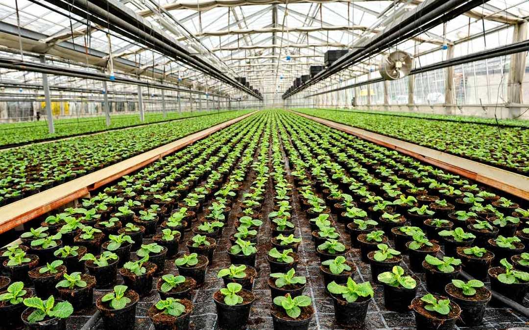 ¿Cómo aumentar la productividad de tus cultivos con la iluminación?