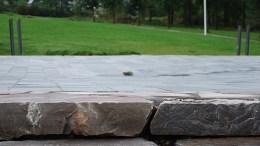 Scene fontene