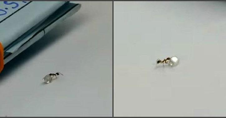 Ոսկու խանութում ադամանդ «գողացող» մրջյունի տեսանյութը համացանցի հիթ է դարձել (Տեսանյութ)