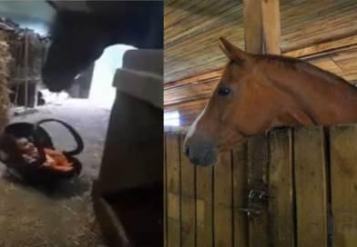 Միայն տեսնեք, թե ինչ արեց ձին, երբ երեխան սկսեց լաց լինել (տեսանյութ)