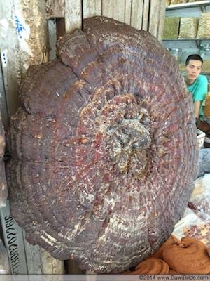 Gigantic Mushroom_Guangzhou