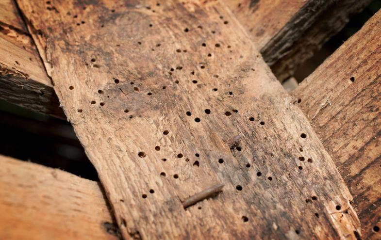 Holzwurm beseitigen