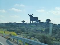 First Osbourne Bull hoarding of the trip