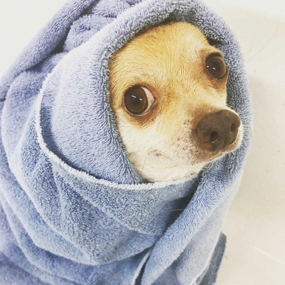 medium resolution of bath