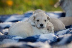 View More: http://jolenesiegristphotography.pass.us/puppies