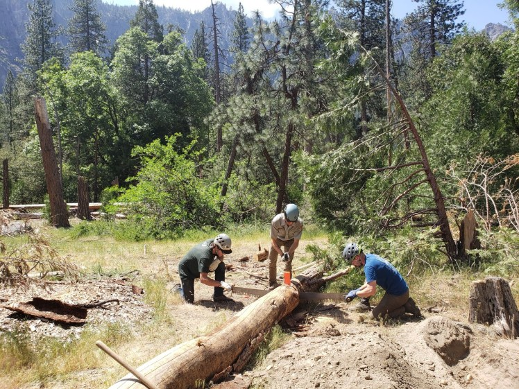 Two stewards use a crosscut saw to cut a log while a National Park Service ranger observes