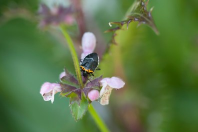 A cute bug
