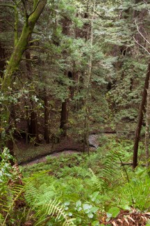 Purisima_Creek_Redwoods16