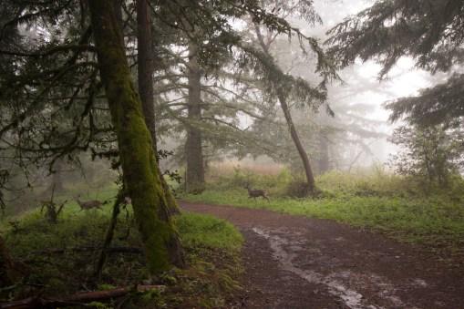Purisima_Creek_Redwoods22