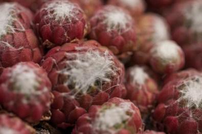 cactus threads