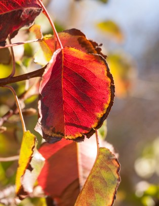 first-of-fall2016-redleaf