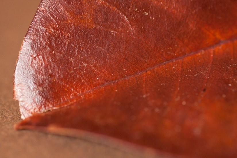magnolia-leaf-texture