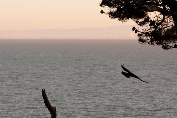 sf-bay-sunrise-silohuette