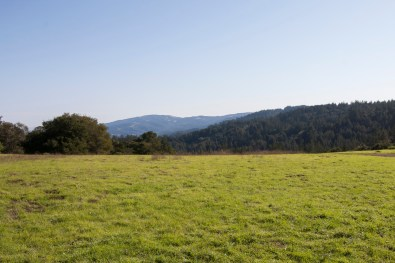 161124-wunderlich-meadow-noon